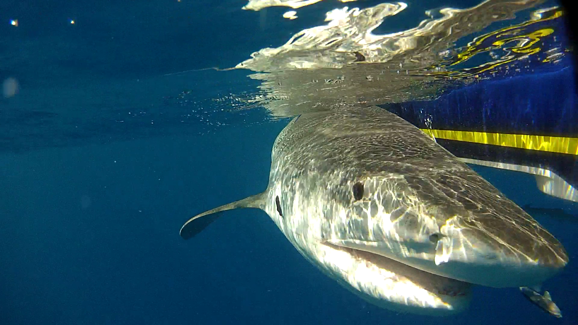 HRI's Sportfish Center and OCEARCH to Unlock the Mysteries of Gulf
