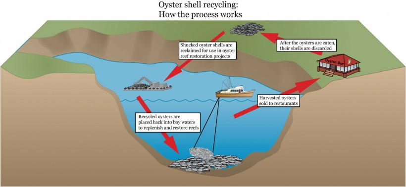 Oyster Recycling Process