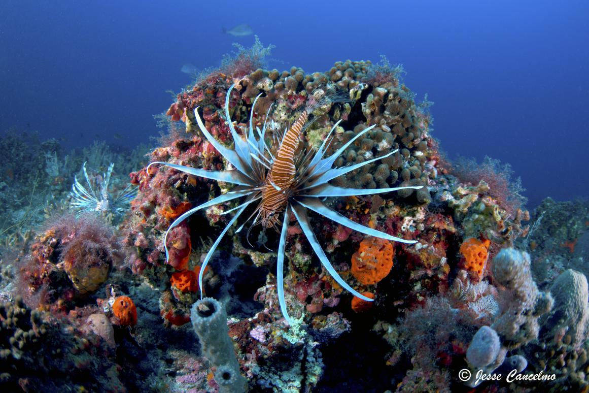 Lone Star Lionfish Symposium