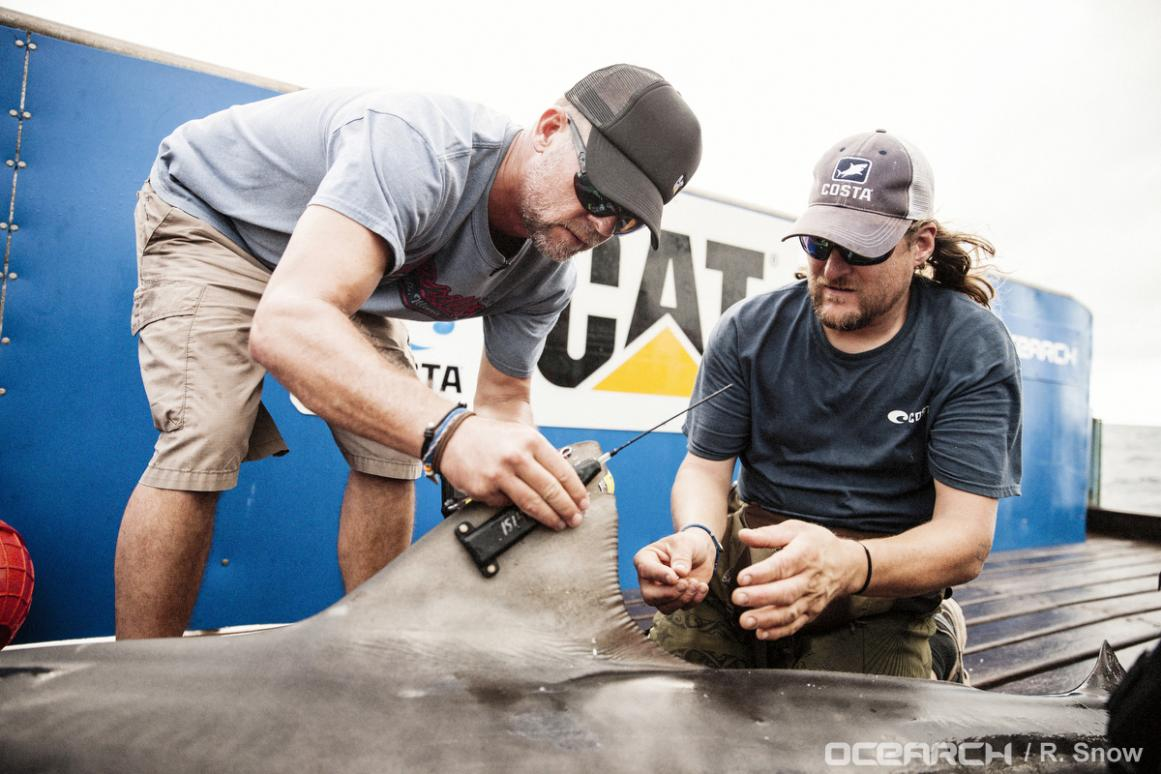 OCEARCH Expedition