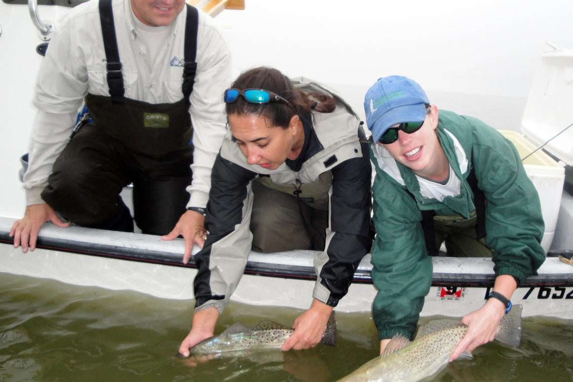 Releasing tagged Spotted Seatrout after implantation