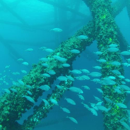 artificial reef benefits