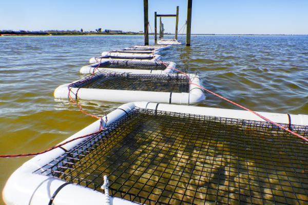 oyster cages